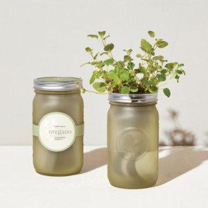 [Modern Sprout] Pot De Jardin Origan
