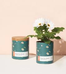 [Modern Sprout] Jardinière Cirée Thank You Daisies