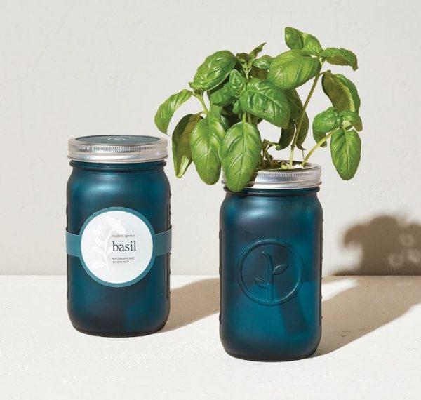 [Modern Sprout] Pot De Jardin Basilic