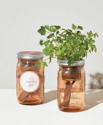 [Modern Sprout] Pot De Jardin Persil