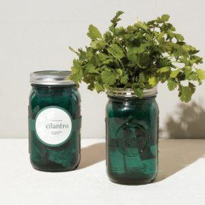 [Modern Sprout] Pot De Jardin Coriandre