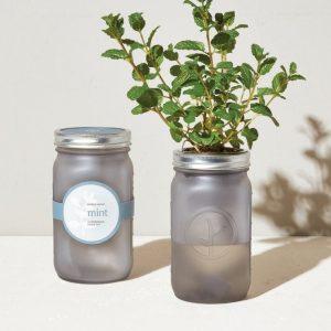 [Modern Sprout] Pot De Jardin Menthe