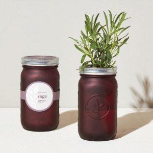 [Modern Sprout] Pot De Jardin Sauge
