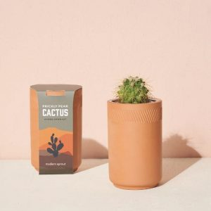 [Modern Sprout] Kit Terre Cuite Cactus