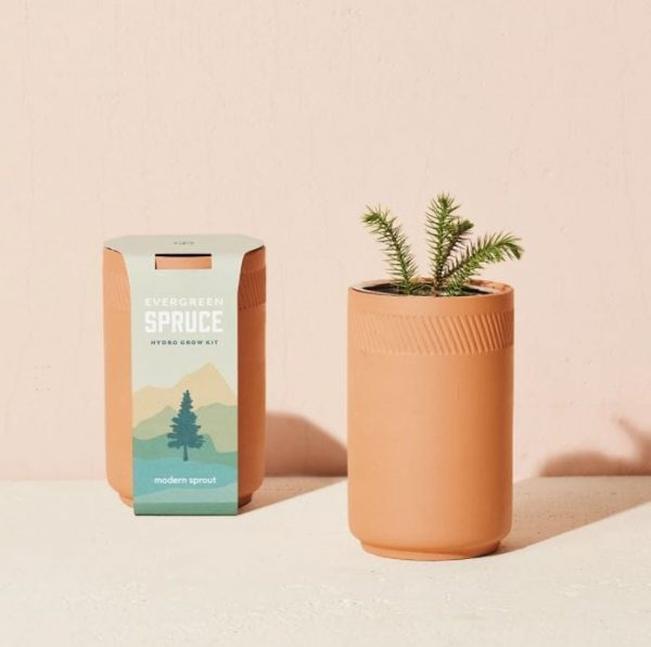 [Modern Sprout] Kit Terre Cuite Épinette